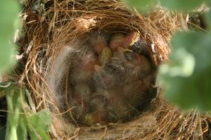 Bird babies2